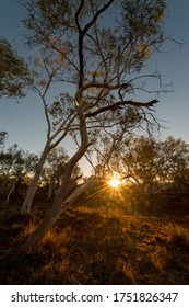 Gumtree, Western Australia, Sunrise, Sun