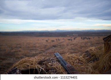 Gun barrel resting on dried grass of a hide overlooking an area of wetlands where waterfowl feed during hunting