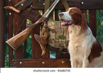 Gun dog near to shot-gun and trophies, horizontal, outdoors