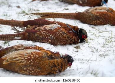 gun downed pheasants