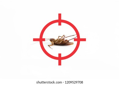 gun target to kill cockroach , pest control concept