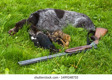 gundog, shotgun and hunting trophies (three downed grouse) lie on the green grass
