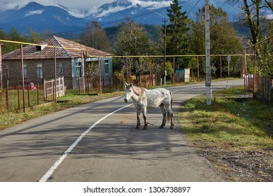Guria, Georgia - October 27, 2018: White horse standing in the middle of the road in the coutryside of the Guria region in Western Georgia north of Ozurgeti.