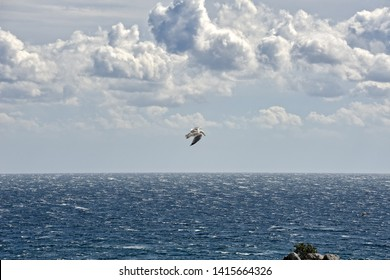 GURZUF, CRIMEA - Crimean seascape with a nice seagull flying over Gurzuf Bay (town settlement near Yalta) under impressive white clouds over the Black sea.