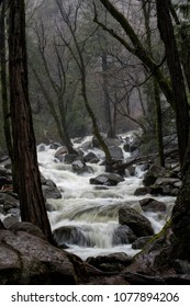 Gushing, raging river water over boulders in a deep forest