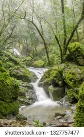 Gushing water in Cataract Falls after winter rains. Mount Tamalpais State Park, Marin County, California, USA.