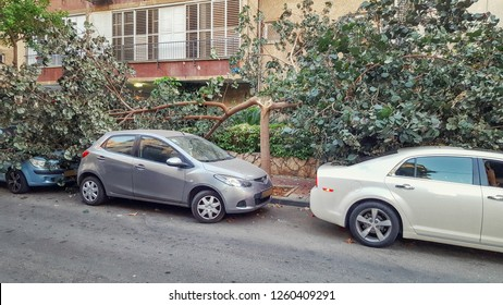 The gust of wind broke the tree on the pavement into 2 parts. The branches fell onto parked cars. The krone fallen forward is on the white car and another one fallen backward is on the blue vehicle