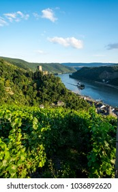 Gutenfels castle with vineyards in the foreground in Rhine river Germany Europe