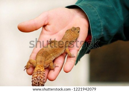 Guy Gecko Man Holds Hands Reptile Stock Photo Edit Now 1221942079