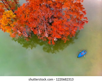 The guy and the girl in the boat on the lake. View from above. Swamp cypress in autumn