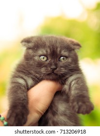 guy holds a kitten on a green background