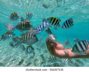 A guy reaching his hand to feed the sea water fish