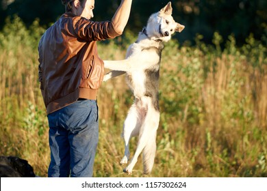 the guy is walking with a dog in the countryside. feeds and trains. the dog jumps for the delicious