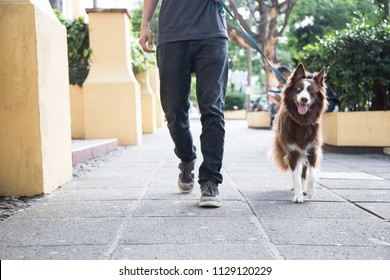 Guy walking his dog with a leash in a beautiful street towards the camera. Border collie looks happy and enjoys the city walk. Walls in the street are yellow with plenty of vegetation. Young dog owner