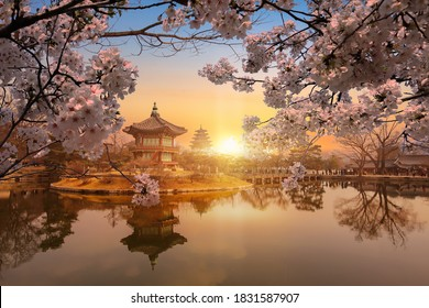 Gyeongbokgung Palace and.cherry blossom in spring,Seoul,South Korea.