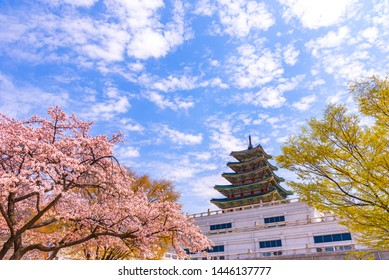Gyeongbokgung Palace with cherry blossom in spring at seoul,South Korea