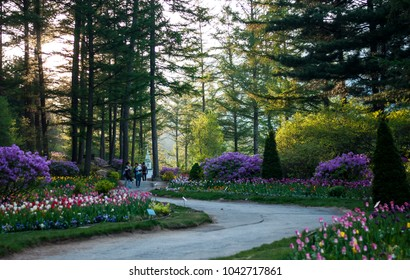GYEONGGI-DO, SOUTH KOREA - APRIL 29, 2016: Visitors having a stroll in the beautiful 'Garden of Morning Calm' located in South Korea, with pretty flowers and tall trees lining the pavement.
