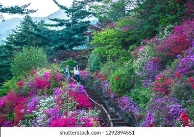 """GYEONGGI-DO, SOUTH KOREA - APRIL 29, 2016: A couple of Korean women walking down a long flight of steps with colourful flowers and plants surrounding the staircase in the """"Garden of Morning Calm""""."""