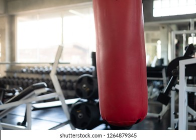 Gym Fitness and workout equipment and modern fight club with punching bags, Boxing : set of the modern fitness gym.