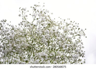 Gypsophila (Baby's-breath flowers), light, airy masses of small white flowers.