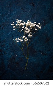 Gypsophila ,Baby's-breath flowers, light, airy masses of small white flowers. Spring concept