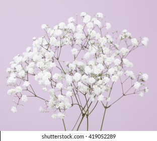 Gypsophila (baby's-breath) flowers on a light lilac color background