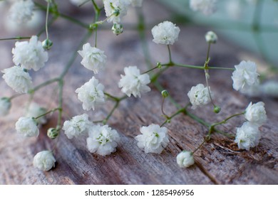 Gypsophila for decor. Macro. Gypsophila flowers on the stump for design and decoration. Small flowers for the design of bouquets.