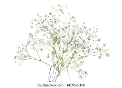Gypsophila flowers in glass vase isolated on white background