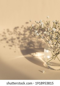gypsophila flowers in glass vase on beige background, light and shadow