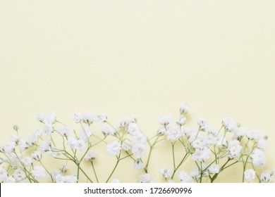 Gypsophila flowers on a beige background close-up, spring composition. Flat lay, top view, copy space.
