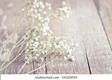 Gypsophila flowers on wooden background