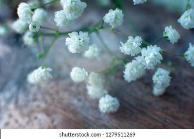 Gypsophila flowers on a wooden surface. Macro. Gypsophila flowers in soft blue light. Flowers on a wooden background.