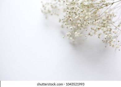 Gypsophila flowers texture white background empty space