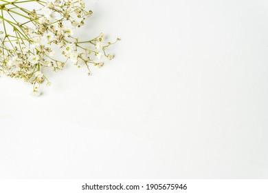 gypsophila pequeña flor blanca aislada en fondo blanco en la vista superior.  Enfoque selectivo.