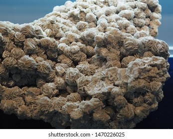 Gypsum is a soft sulfate mineral composed of calcium sulfate dihydrate, with the chemical formula CaSO4·2H2O. It is widely mined and is used as a fertilizer and as the main constituent in many form