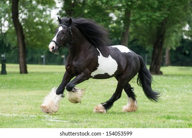 Gypsy Cob at canter.