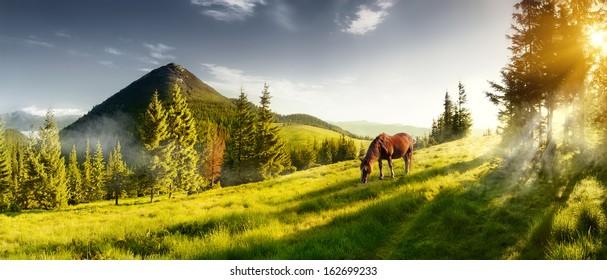 H лошадь на пастбище в горной долине. Пейзаж утренняя панорама гор летом