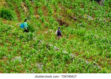 HA GAING, VIETNAM - 5/23/2016: Mountain farmers in the fields in Ha Giang, Vietnam.