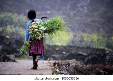 Ha Giang, Vietnam - March 18, 2018: Nomadic girl carrying flowers in the middle of the mountains of northern Vietnam