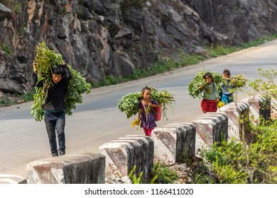 Ha Giang, Vietnam - March 18, 2018: Family with children transporting big loads of plants on a road in northern Vietnam. Child labor is very common in rural Asia. Credit: Dino Geromella/Shutterstock
