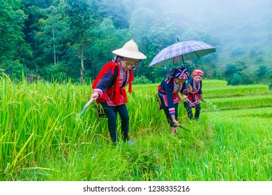 HA GIANG , VIETNAM - SEP 14 : Women from the Red Dao minority in a village near Ha Giang in Vietnam on September 14 2018. The Red Dao is one of the 54 ethnic groups of Vietnam