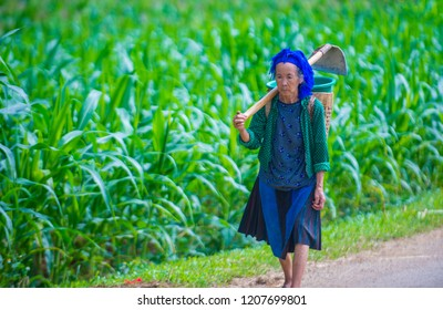 HA GIANG , VIETNAM - SEP 15 : Vietnamese farmer in a countrside near Ha Giang Vietnam on September 15 2018. nearly 80 percent of the population of Vietnam living in rural villages
