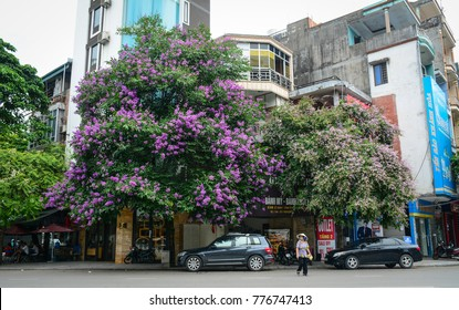 Ha Long, Vietnam - May 23, 2016. Street with many trees in Ha Long, Vietnam. Ha Long is the capital city and 1st-class provincial city of Quang Ninh Province, Vietnam.