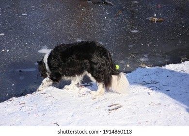 Haarlem, Netherlands-February 11 2021: A dog is playing under the snow in the Netherlands after the country experienced two days of heavy snowfall.