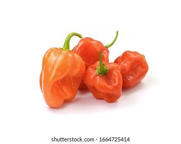 Habanero chilis isolated on white background. Fresh ripe Caribbean Red Habanero hot chili pepper with green stem.