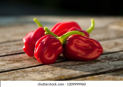 Habanero peppers on wooden table, ripe red habanero peppers on rustic wooden table in bright sun light, hot spicy habanero peppers