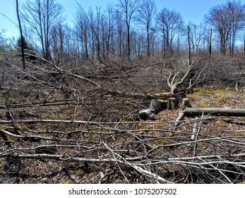 Habitat Management On State Game Lands