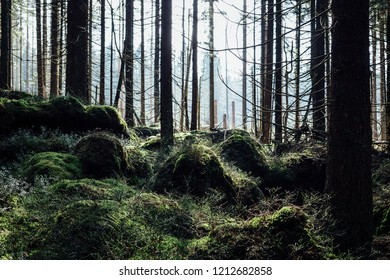 Habitat, nature and the forest landscape