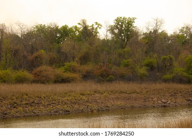 Habitat Shot Of Tiger In Indian Forest During Safari