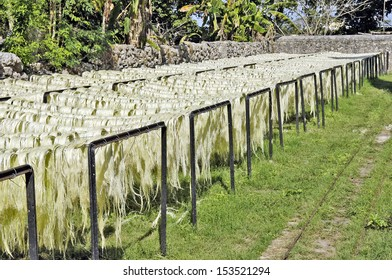 Hacienda Sotute de Peon, Yucatan, Mexico, 2008. A farm area in the countryside where they grow and process Agave, producing fibre. Agave fibre dying in a scaffold.